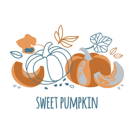 SWEET PUMPKIN Delightful Garden Vegetable Nature Hand Drawn Flat Design Vector Illustration For Print