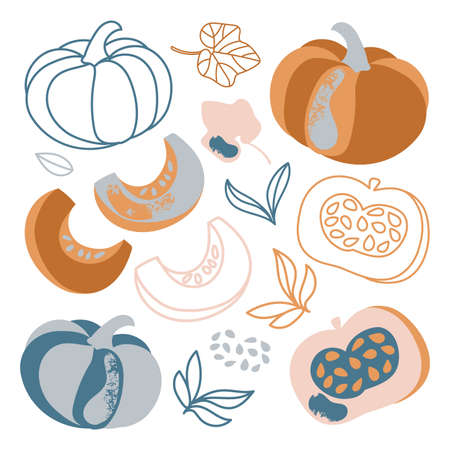 PUMPKIN Autumn Garden Vegetable Nature Hand Drawn Flat Design Cartoon Clip Art Vector Illustration For Print