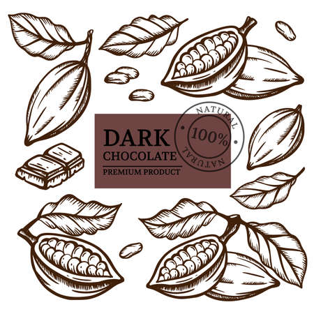 DARK CHOCOLATE And Cocoa Beans Of Theobroma Tree Monochrome Design On White Background In Vintage Style Hand Drawn Clip Art Vector Illustration Set For Print