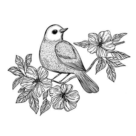 NIGHTINGALE Songbird Sits On A Branch With Blooming Flowers Monochrome Hand Drawn Sketch In Chinese Style Cartoon Clip Art Vector Illustration For Print 向量圖像