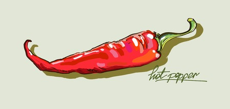 jalapeno pepper: vector hand drawing red hot peppers Illustration