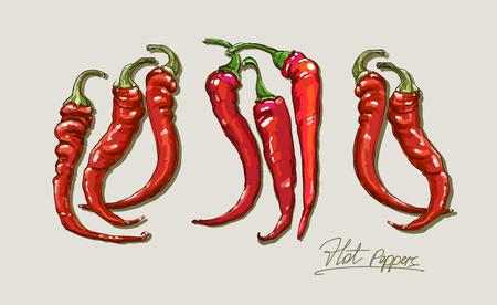 chiles picantes: vector de dibujo a mano pimientos rojos calientes