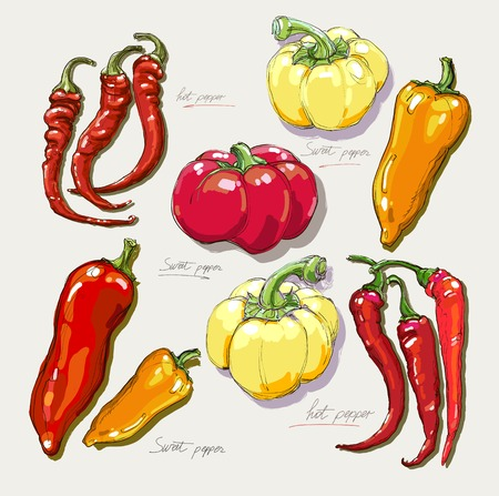 peppers: vector hand drawing red hot peppers Illustration