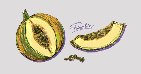 melons: vector hand drawing juicy melons Illustration