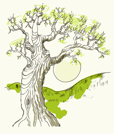 thick forest: Hand drawing of the old oak tree in the sun in the afternoon. Vector. Vintage.