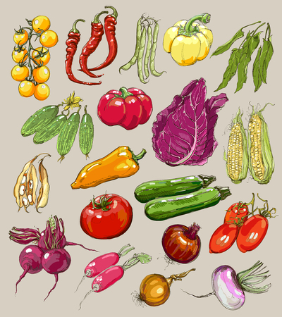 sorrel: Big collection of hand-drawn vegetables, vector illustration in vintage style. Realistic image.