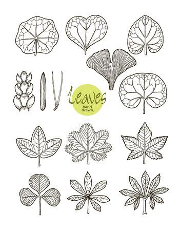 varieties: Vector collection of varieties of leaf shape. Illustration