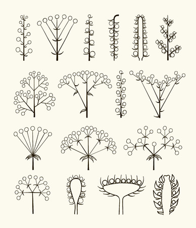 raceme: Set of vector different types of inflorescence isolated on white.