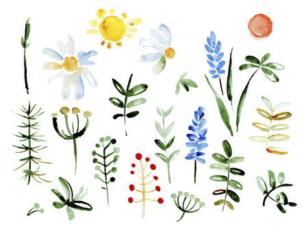 green floral: Collection of hand drawn flowers. Elements for your design.  Vector watercolor