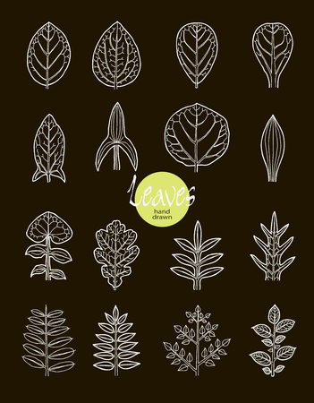 varieties: .Vector collection of varieties of leaf shape. Botanical visual aid. Illustration