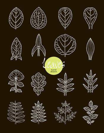 visual: .Vector collection of varieties of leaf shape. Botanical visual aid. Illustration