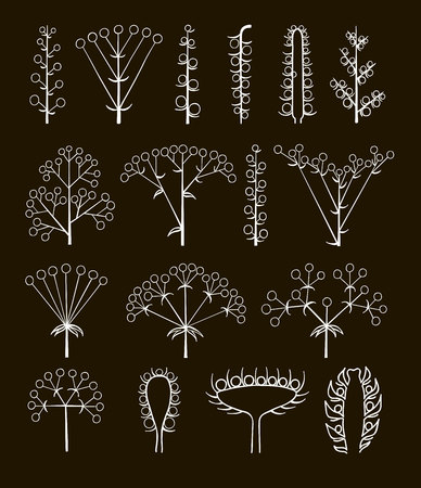 Set of vector different types of inflorescence, scientific scheme of flower on stalk ,botany, isolated on black.