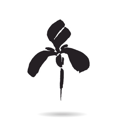 black and white flower: flower . Floral background. Calligraphy ink. Stylized calligraphic ink iris. Illustration