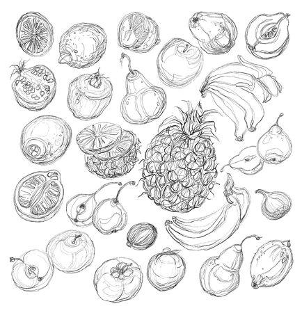 Reeks vruchten. Uit de vrije hand tekening. Stock Illustratie