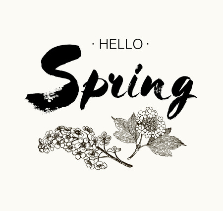 HI: Phrase Hello spring Brush Pen lettering isolated on background. Handwritten vector Illustration. Handwritten modern brush lettering. Hand drawing elements design viburnum, wild cherry Illustration