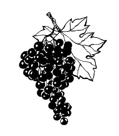 Black silhouette of grapes. Vector illustration. Ilustração