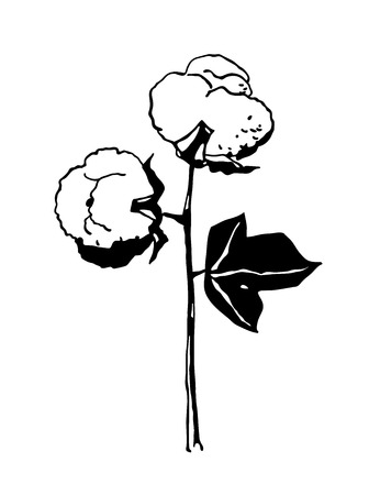 Hand drawn cotton branch in vintage style