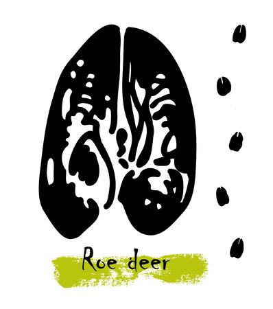 Wildlife animal traces or footprints of a roe deer illustration.