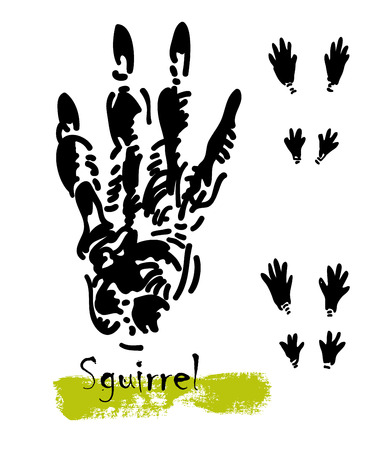 Wildlife animal traces or footprints of a squirrel  illustration.