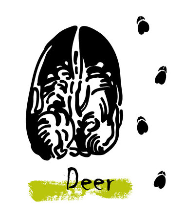 Wildlife animals. Traces of a deer. Footprints of variety of animals, illustration of black silhouette footprints. Vector illustration