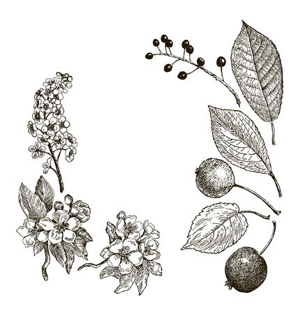 Vintage graphic Vector leaves, flowers and fruits of the wild pear, bird-cherry and crab. Greeting card.