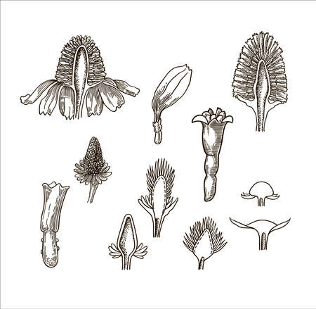 Vector set of ink hand drawn medical herbs and plants sketch. Vintage collection of herbal flowers illustration.