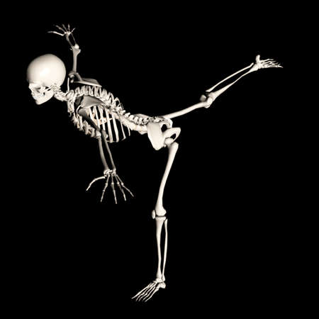 esqueleto humano: esqueleto 76 Foto de archivo