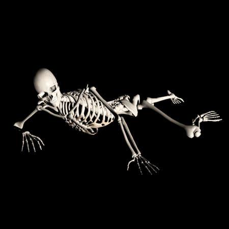 fibia: skeleton80