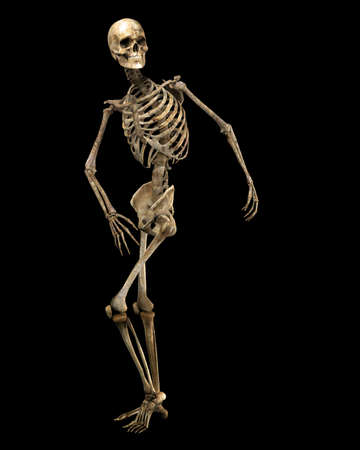 fibia: poised skeleton