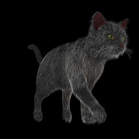 wandelen zwarte kat
