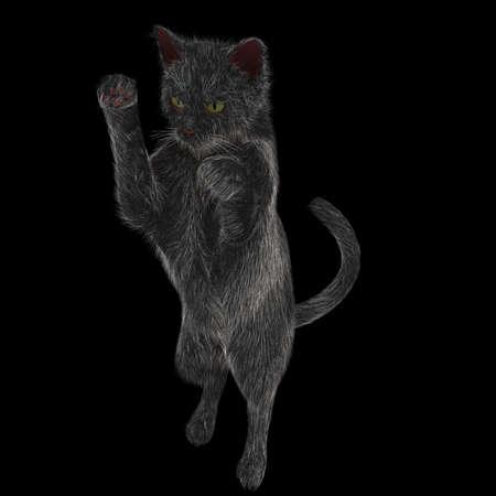 Actieve zwarte kat