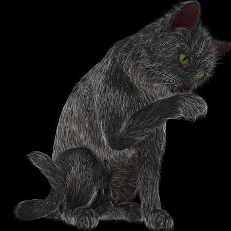 cat grooming: Grooming Black Cat