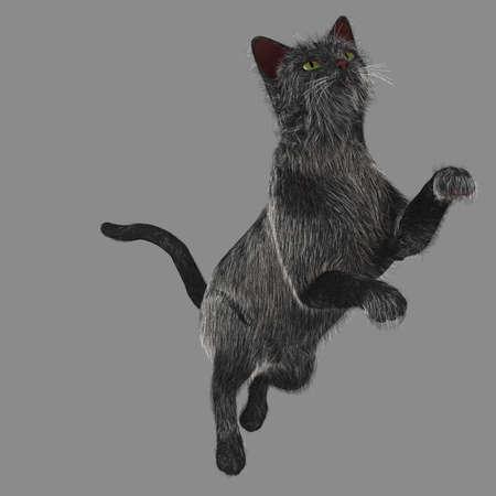 Actieve Black Cat