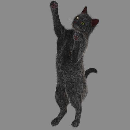 Playful black cat Stock Photo