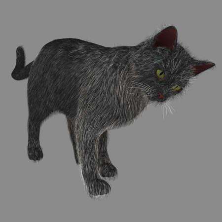 Benieuwd Cat