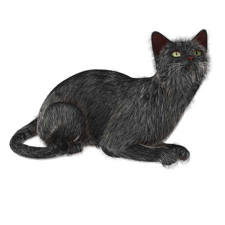 Op zoek Cat Stockfoto