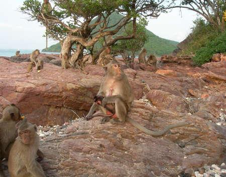 Monkeys on a tropical island.