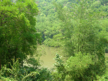 Tropical river surrounded by plants. Good background.
