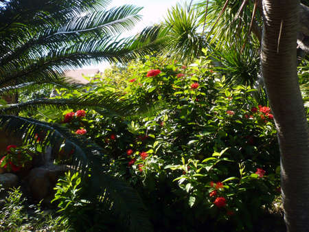 Tropical vegetation and flowers