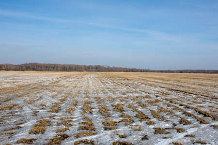 Russia. Snow-covered agricultural field in the far East