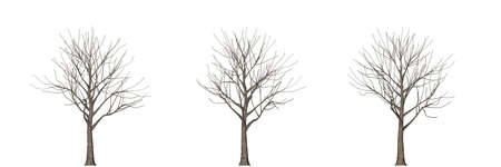 subtropics: 3d rendering of three trees isolated on white Stock Photo
