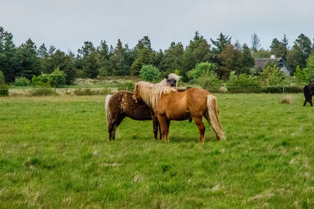 a lovely horse in a big green field Stock Photo