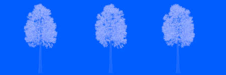 3d rendering of three trees as lines on a blue background
