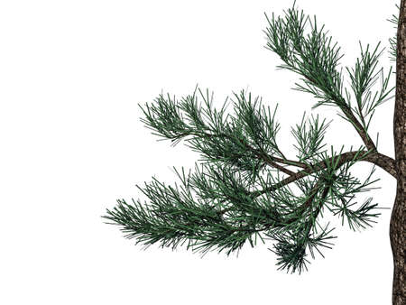 3d rendering of a foreground tree branch isolated on white background