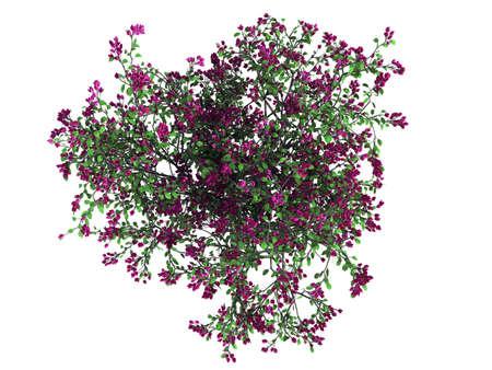 3D-weergave van een realistische groene bovenaanzicht boom geïsoleerd op wit