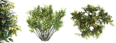 3d rendering of a realistic green top view tree isolated on white Banco de Imagens