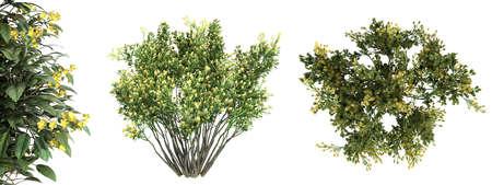 Rendu 3D d'un arbre de vue de dessus vert réaliste isolé sur blanc