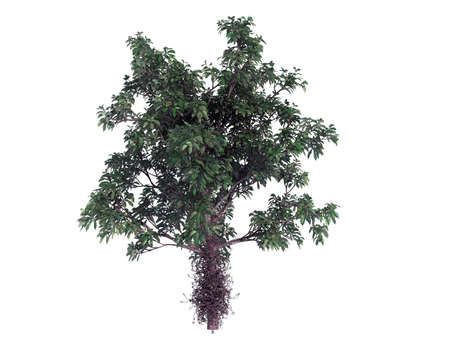3d rendering of a realistic green tree isolated on white