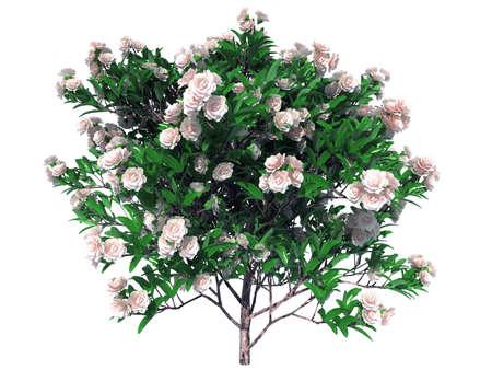 白で隔離リアルな花の薮の 3 d レンダリング