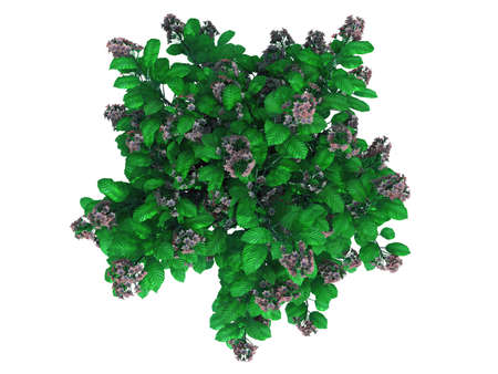 3d rendering of a realistic green top view tree isolated on white Stock Photo